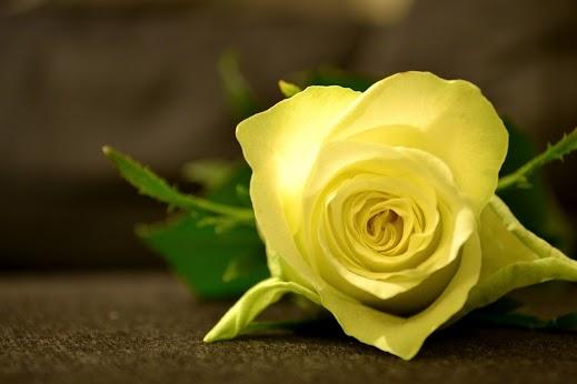 Es ist wichtiger daß sich jemand über eine rosenblüte freut als